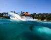 Sea Ray SPX 190 Bild 11